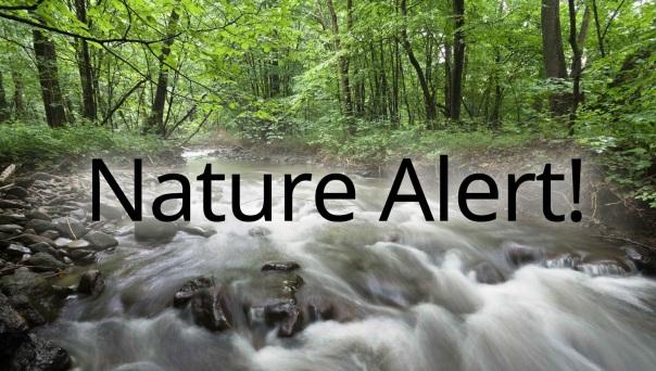 Nature_Alert_ 2
